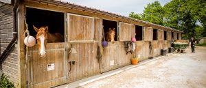 Pension équestre: une excellente alternative pour loger ses chevaux