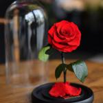 Rose éternelle sous verre: Cadeau d'un jour qui reste toujours!